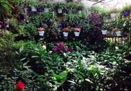 Vườn treo 10m2 tràn ngập hoa trên sân thượng tầng 4