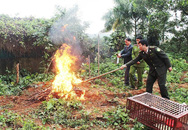 Vì sao tỉnh Quảng Ninh tiêu hủy 4 cá thể chim quý hiếm?