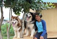 9X nuôi đàn chó Tây to xác để khách chụp ảnh và thu trăm triệu/tháng