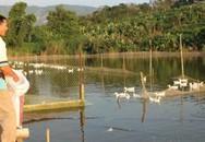 Thu hơn 200 triệu đồng mỗi tháng nhờ bỏ làm thợ hồ vay mượn tiền nuôi vịt