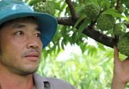 Trai phố núi trồng loài na trăm mắt, lãi 100 triệu đồng