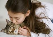 Nuôi mèo có thể khiến bạn rối loạn thần kinh