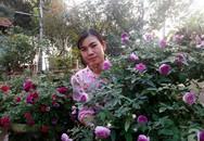 Khu vườn hoa hồng rộng hơn 1000m², rực rỡ sắc màu từ hoa nội đến hoa ngoại của cô giáo mầm non ở Hà Nội