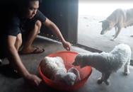 Thanh niên đi xế hộp tiện tay bế trộm chó: 'Là người yêu động vật'