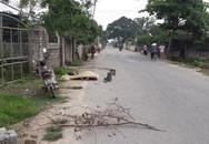 Đang đi làm, người dân tá hỏa phát hiện 1 thi thể nằm bên đường