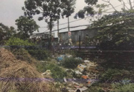 Công an kêu gọi tìm kiếm nhân chứng vụ thi thể trẻ sơ sinh bị heo rừng tha đi ở Sài Gòn