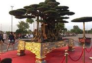"""""""Choáng"""" với bộ bàn ghế ngọc, cây sanh cổ giá chục tỷ đồng"""