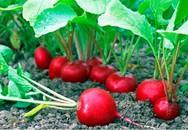 4 loại rau củ trồng tốt nhất khi mát trời và cách nuôi lớn chúng siêu hiệu quả