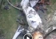 Truy tìm kẻ giết khỉ rồi phát trực tiếp lên mạng xã hội