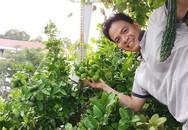 Khu vườn sân thượng tuy nhỏ nhưng bạt ngàn rau sạch của người chồng dồn sức chăm bón cho vợ con ở Vũng Tàu