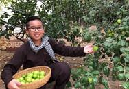 Táo ta sai trĩu trịt trong vườn nhà người đàn ông Việt ở Mỹ