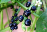 Lương y mách 3 loại hạt, 2 loại rau rẻ tiền giúp tăng cường sinh lý chả kém gì Viagra