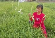 Ninh Bình: Cả làng khấm khá nhờ trồng cây ra hoa trắng như mây