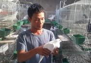 Bỏ nghề lái xe về quê nuôi chim lãi hơn chục triệu đồng/tháng