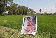 Nông dân Ấn Độ treo poster sao khiêu dâm ở cánh đồng để ngăn trộm