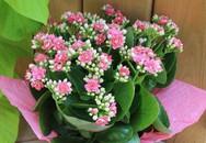 Trồng cây sống đời để vừa có hoa đẹp chơi Tết lại có cây thuốc quý