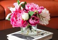 Chán hoa cúc, lay ơn hay vạn thọ, hãy trưng 5 loại hoa này vào dịp Tết để mang đến may mắn, tài lộc