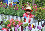 """Vườn hoa tulip đẹp như tranh và """"bí kíp"""" chăm hoa nở đúng Tết của mẹ Việt ở Hà Lan"""