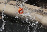 Cá chép chết nổi khi vừa được thả ở sông Tô Lịch