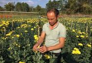 """8x """"đút túi"""" hơn 200 triệu đồng mỗi năm nhờ hoa cúc"""