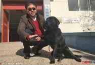 Chó dẫn đường của người đàn ông mù bị bắt trộm, một ngày sau con vật bất ngờ quay về nhà với thứ này trên cổ