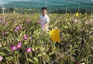 Chàng trai 9X cất bằng kỹ sư về quê làm giàu bằng vườn hoa lan Denrobium thuần chủng