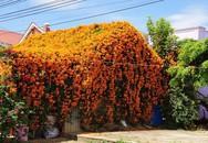 """Ngôi nhà phủ kín hoa màu cam trên mái khiến dân tình """"phát sốt"""" ở Lâm Đồng"""