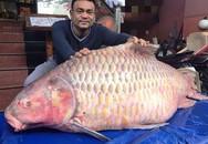 """Đại gia """"săn"""" cá hô từ Campuchia, Lào, Thái... làm tiệc đón Tết"""