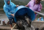 Lên núi nuôi cá lăng lão nông kiếm tiền tỷ mỗi năm