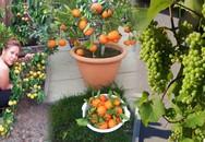 """""""Lạc lối"""" trong vườn cây ăn quả rộng 500m² sai trĩu trịt của mẹ Việt ở Mỹ"""