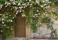 Trồng cây trước cửa nhà là điều cấm kị trong phong thủy nhưng có thể hóa giải bằng cách sau