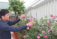 Vườn hồng hàng trăm gốc đẹp như mơ giữa phố của anh giám đốc trẻ