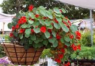 """5 loại hoa có công dụng đuổi muỗi """"xuất sắc"""" nên trồng ngay"""