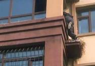 Nhân viên giao hàng leo lên tầng 3 cứu cụ bà tàn tật khỏi đám cháy