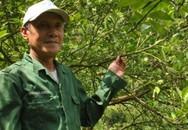 Cụ ông U70 bỏ túi nửa tỷ mỗi năm nhờ trồng cam theo công nghệ cao