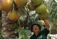 """Cụ ông xây được """"biệt thự"""" từ trồng dừa, nuôi cua"""