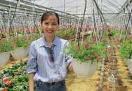 Trồng hoa dạ yến thảo, lãi 1 triệu/ngày