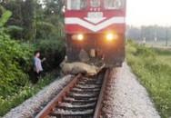 Clip tàu hỏa tông chết đàn trâu thả rông ở Thanh Hóa khiến mạng xã hội xôn xao