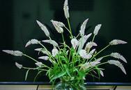 Những bình hoa dại tô điểm căn hộ cao cấp của người phụ nữ Hà Nội