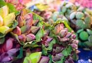 Ngập tràn sắc sen tại chợ đầu mối hoa lớn nhất Hà Nội