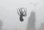 Sửng sốt vì bạch tuộc, sao biển rơi như mưa xuống đường sau bão