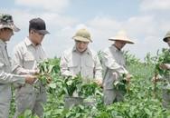 Vùng trồng đậu nành dược liệu của Bảo Xuân chính thức được công nhận đạt chuẩn GACP – WHO