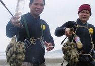 Đi lặn bắt rum biển kiếm tiền triệu/ngày