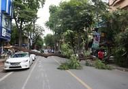 Cây phượng đổ đè trúng ôtô đỗ trên phố cổ Hà Nội