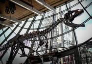 Đại gia ẩn danh chi 54 tỷ đồng mua hóa thạch khủng long trưng tại gia