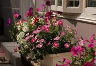 Ngôi nhà phố góc nào cũng xinh xắn và lãng mạn với hoa tươi của người phụ nữ Hà Thành