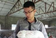 Cất bằng đại học, 9X về quê nuôi thỏ thu trăm triệu/năm