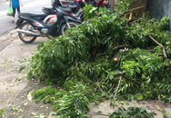 Kẻ gian cắt trộm cây sưa ngay gần trụ sở công an phường