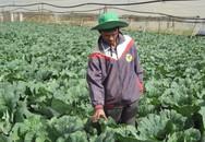 Thu lời 1,2 tỷ đồng/năm từ khu vườn trồng ớt ngọt, bắp sú, cà chua