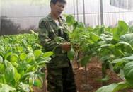 Vợ chồng trẻ bỏ phố về quê trồng rau không cần đất trong nhà kính kiếm 40 triệu đồng/tháng